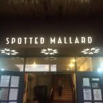 Spotted Mallard.