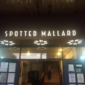 Spotted Mallard